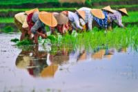 Raising Water Productivity to Increase Food Security thumbnail